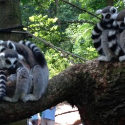 Kinderbeestfeest (Kid's Animal Party) at Artis Zoo