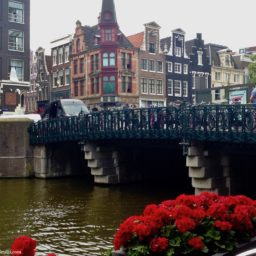 Income Taxes and Small Business in the NL