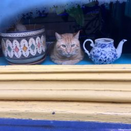 Coffeeshop Kitty